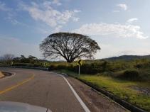 Hernando's favourite tree.